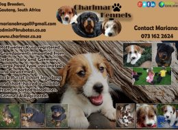 Charlmar Kennels | Dog Breeders Gauteng, South Africa
