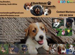 Charlmar Kennels   Dog Breeders Gauteng, South Africa